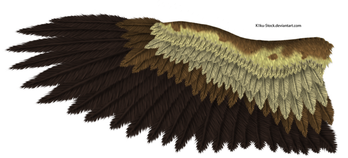 Eagle Wing by K1ku-Stock