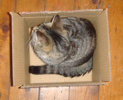 Boxed Cat 2 by SilverQuill