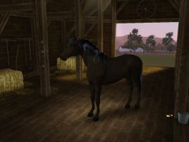 Sims3 Pets Creation Flicka by Senwolf10