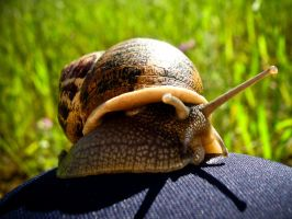 Big Snail Creeping On My Knee by Youcef07