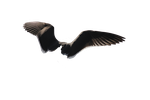 Wings Png Precut 1 by FQPhotography