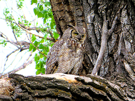 Another Owl by LifeIsToBeHappy