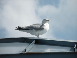 The Almighty Seagull by FrigidRose
