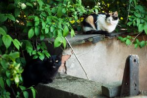 homeless cats 04 by rootkit0