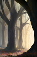 Forest by TomPrante