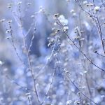 blue.silver.field by Lisa-Schneider