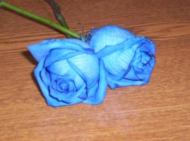 Blue Roses Radient Beauty by AlexTheGuardain