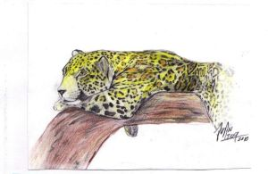 Otorongo jaguar by JuanAtoq