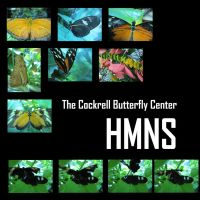 The Cockrell Butterfly Center by systemcat