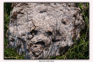Face in cow crap by Jon4H