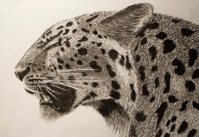 Charcoal Leopard by RichardFrost