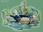 Wood Ducks by Prima-Donna