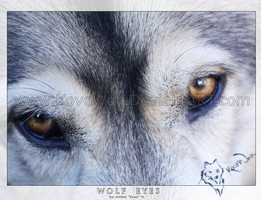 .:: Wolf Eyes ::. by KovoWolf