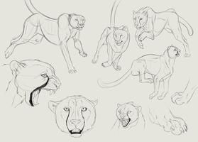 Sketchtime: Cheetah by LivanaS