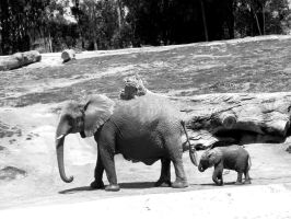 Mother and Baby Elephant by emmatson
