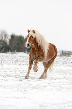 Macho in the snow by MissToseland