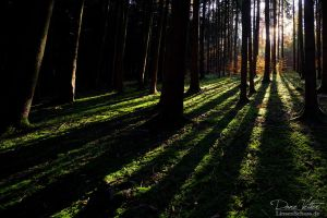 Shadow play in the wood II by LinsenSchuss