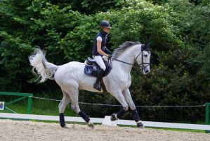 Warmup Riding Training Canter by LuDa-Stock