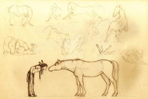 Horse Sketches by AurelGweillys