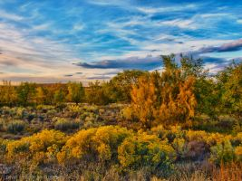 Autumn Colors by dnortonl2010