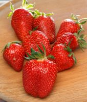 fresh sweet strawberries by sztewe