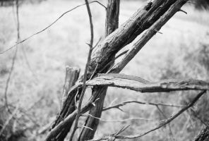 Broken Branches- B and W by Chris01125