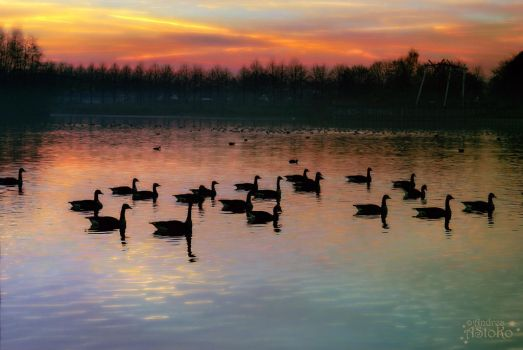 An evening geese meeting ~ bright colors by AStoKo