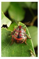 The bug of all colours by kiew1