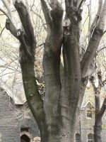 gnarled tree1 by CircuitDruid-stock