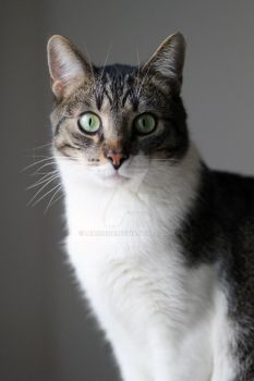 My Cat by mihonshi
