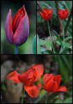 Secret Life Of Tulips by organicvision
