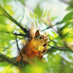Squirrel by nnIKOO