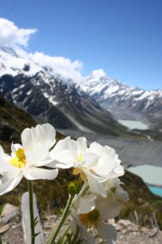 Mt. Cook, New Zealand by OneMansWreck
