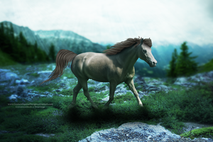 Fili [COMMISSION] by CoutureEquineDesigns
