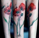 Poppies by mattynox