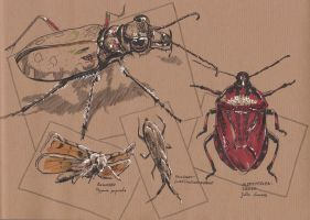 Traditional Sketching 1 - Insects by IgnazioDelMar