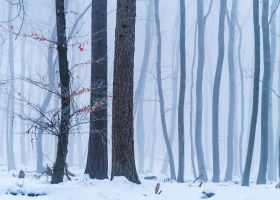 Winter pattern by aw-landscapes