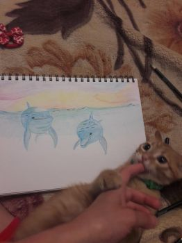 Dolphins and crazy kitten by TanyaLis