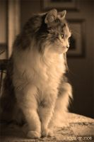 Afternoon Watch by Momma-Cat