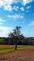 Tree in summer time with clouds by patrickjobst