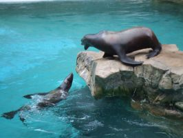 Sea Lion - Back Off Pal by JennHolton