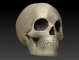 Human Skull in Zbrush by XolotlStudio