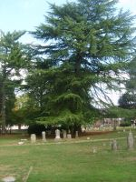Old Cemetery 28 by fairchild-stock