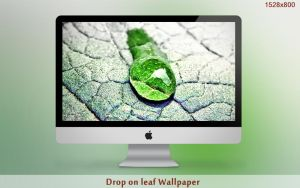 Drop on leaf Wallpaper by hoatongoc
