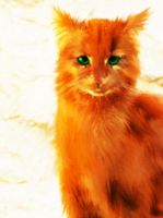 Firestar by Stormdawn-cat