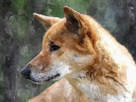 Watercolour Dingo by Starry-eyed-animals