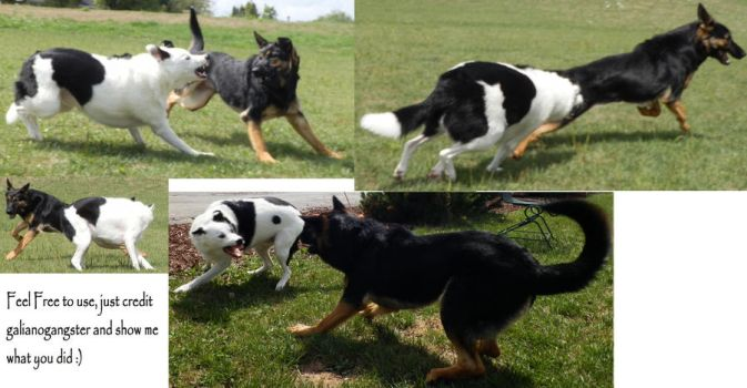 Dog Fight Stock Pack 3 by galianogangster