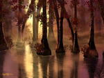 Cypress Swamp by Sillybilly60