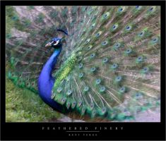 Feathered Finery by wulfster