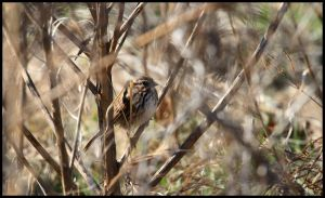 In the Thicket by raistlin306
